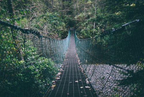 pėdos tiltas,miškas,miškai,takas,pėsčiųjų takas,lauke,gamta,pėsčiųjų tiltas,kelias,vaizdingas,peizažas,pėsčiųjų,lapija,žygiai,kaimas