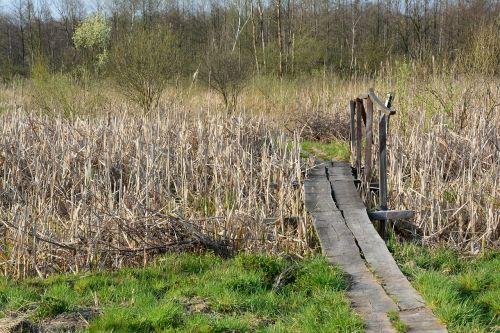 footbridge bridge reeds