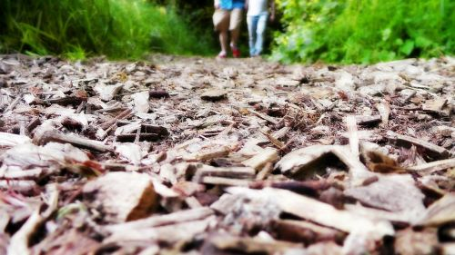 pėsčiųjų takas,mediena,žmonės,vaikščioti,vaikščioti,vasara,veikla,poilsis,scena
