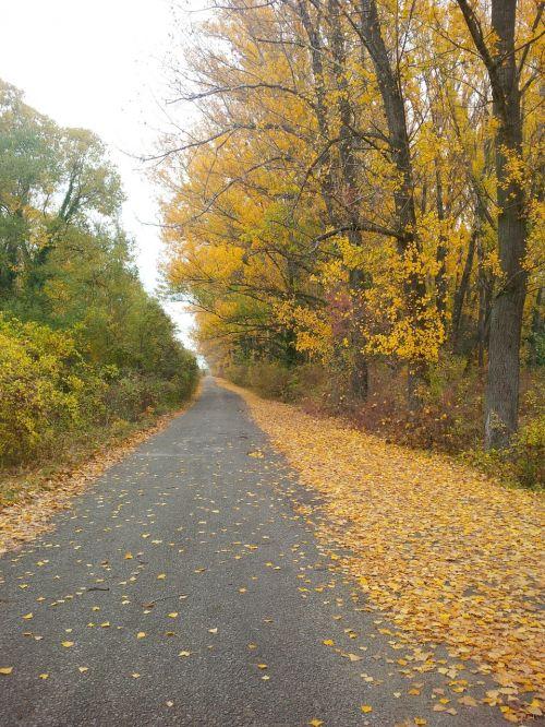 pėsčiųjų takas,takas,takas,kelias,medžiai,ruduo,kritimas,geltona,gamta,lapija,lapai,aplinka,kaimas,miškai,miškas,vaikščioti,vaikščioti,žygiai,žygis,lauke,dykuma,ramus,taikus,kelias