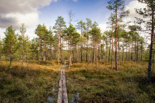 footpath forest swamp