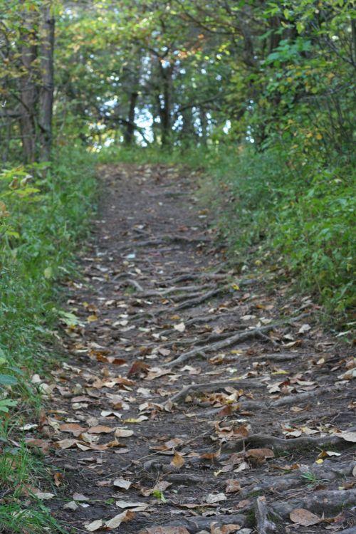 vėlai & nbsp, vasara, miškas, pėsčiųjų takas, takas, žygis, pėsčiųjų takas