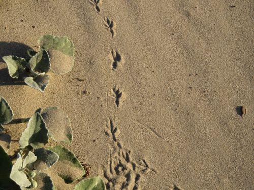 footprint bird sand