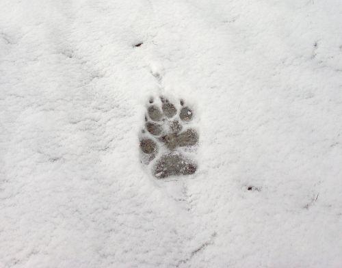 footprint snow white