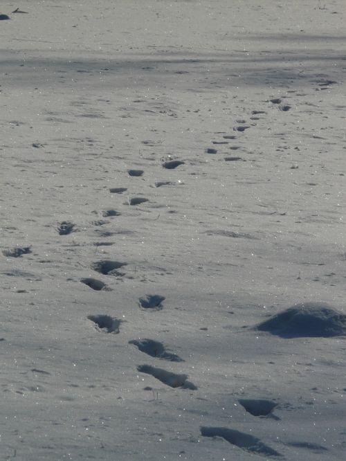 footprint molehill wintry
