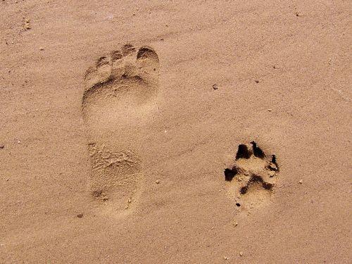 footprint sand footprints