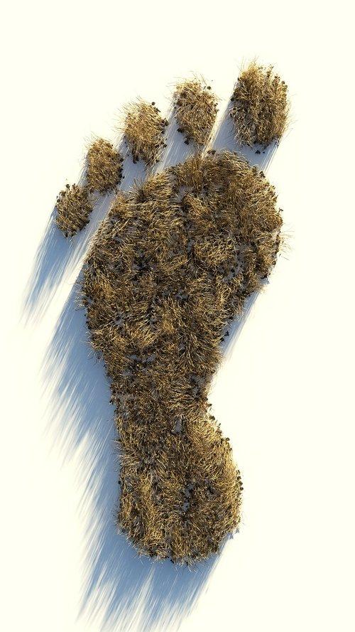footprint  dry  plant