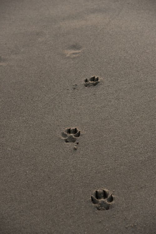 footprints beach sand