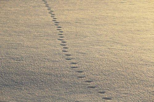 footsteps  snow  walking