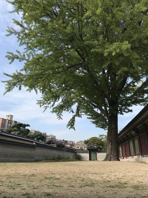 forbidden city  autumn  sky