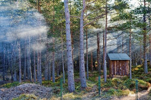 forest sunbeam fog