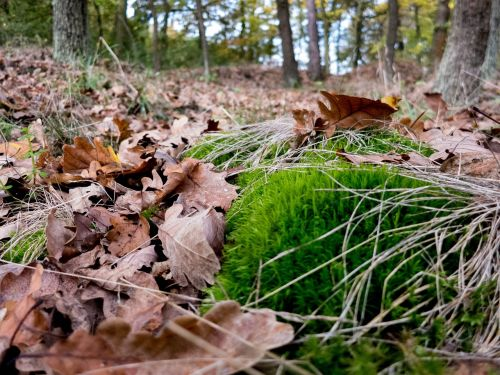 forest moss leaves