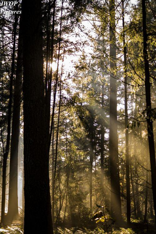 forest light autumn
