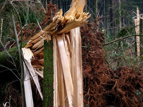 forest forward damage