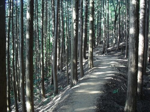 forest mountain path sunbeams