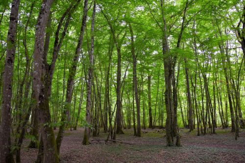 forest background green