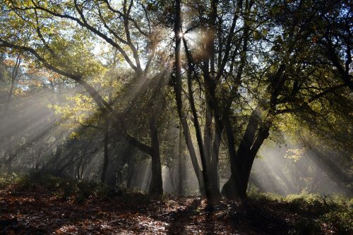 forest rays nature