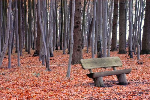 forest bank bench
