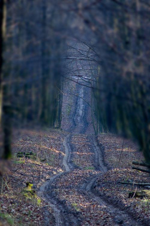 miškas,kelias,ruduo,kelias miške,medis,kraštovaizdis,kelias