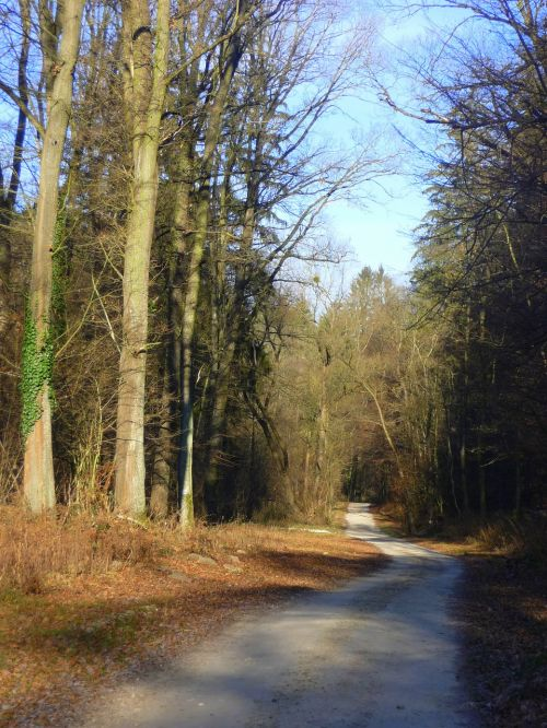 forest road forest road