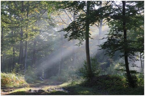saulės spinduliai,rytas,šviesa,kraštovaizdis,saulės spindulys,ramus,medžiai,kontrastas,miškas,mediena,saulės šviesa,saulės šviesa,kelias,pagal medieną,aušra,takas