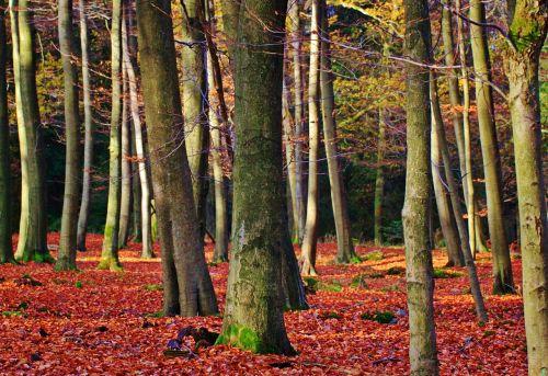 forest autumn fall foliage