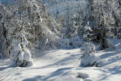 miškas,žiema,sniegas,kalnai,kraštovaizdis,gamta,peizažas,šaltas,sniego kalnas,balta,žiemos peizažas,kalnų peizažas