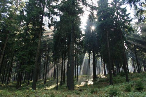 forest light sun