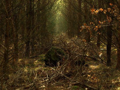 miškas,mįslingas,stebuklinga,paslaptis