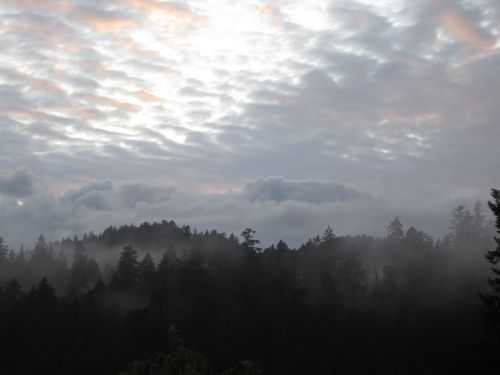 forest mist gray