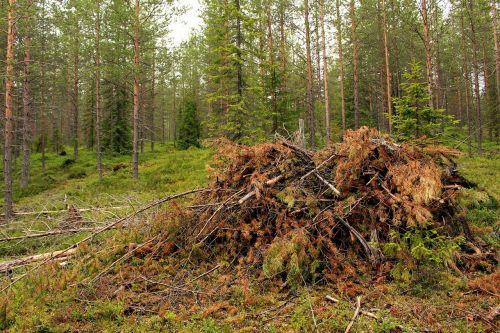 forest terrain woodwork