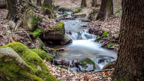 miškas,vanduo,srautas,gamta,akmenys,medžiai,kraštovaizdis,bankas,upelio lova,teka,lovoje,baltas vanduo,ilga ekspozicija,samanos,begantis vanduo