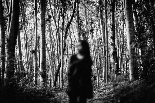 forest darkness dark forest