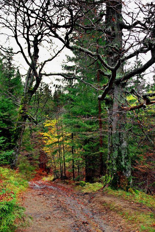 forest autumn tree
