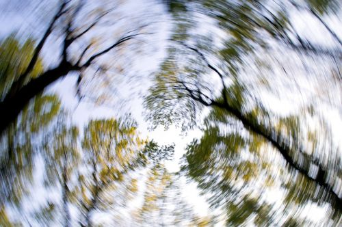 forest trees sky