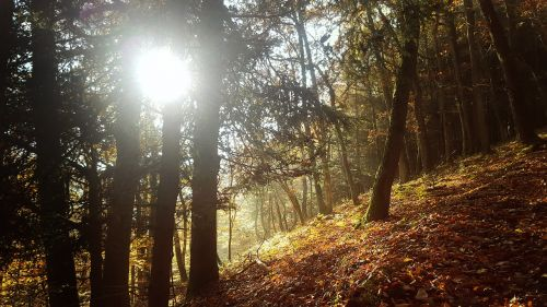 forest autumn sun