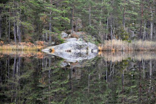 forest lake mirroring
