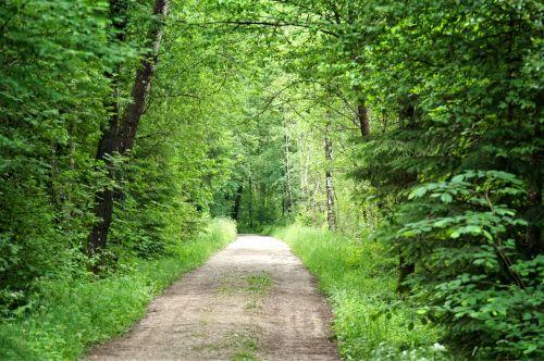 miškas,toli,gamta,medžiai,miško takas,takas,gamtos takas,žygiai,pavasaris,vaikščioti,Promenada,žalias,idilija,atsigavimas,šventė,atsipalaidavimas