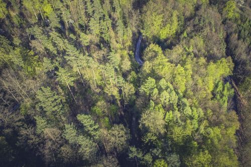 forest,nature,tree,landscape,fairy tale forest,branch branches,forests,old tree,pine cones,forest path,coniferous forest,morgenstimmung,from above,bird's eye view