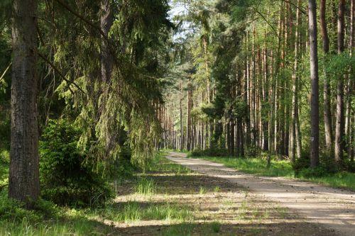 miškas,kelias,kelias,kelias miške,žalias,lapija,spacer,saulė