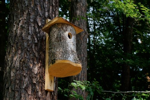 forest tree booth for birds