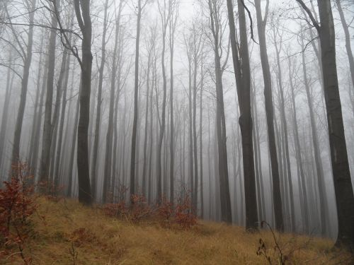 forest fog autumn