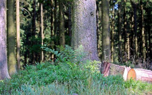 forest strains sawn logs
