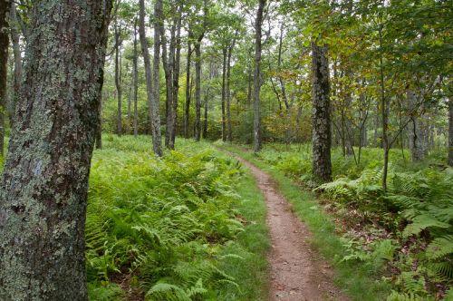 forest path stoneyman trail