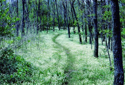 forest path appalachian trail