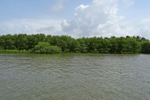 forest mangroves estuary