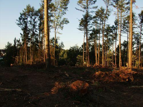 forest storm damage waste wood