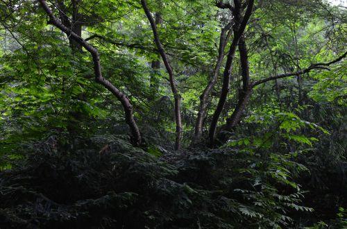 forest bush bushes