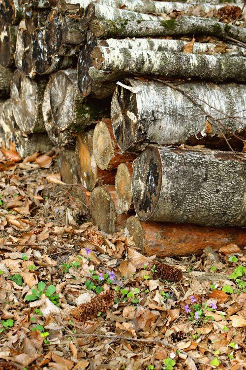forest wood felling
