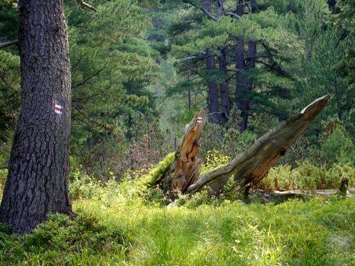 forest brand orientation